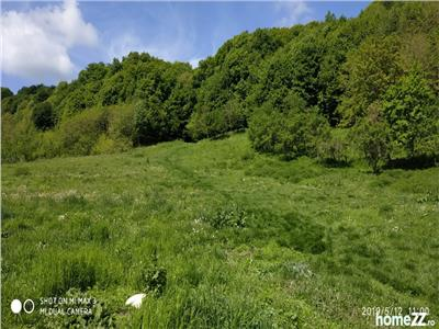 Teren Arabil Extravilan de vanzare Sibiu zona Lotrioara